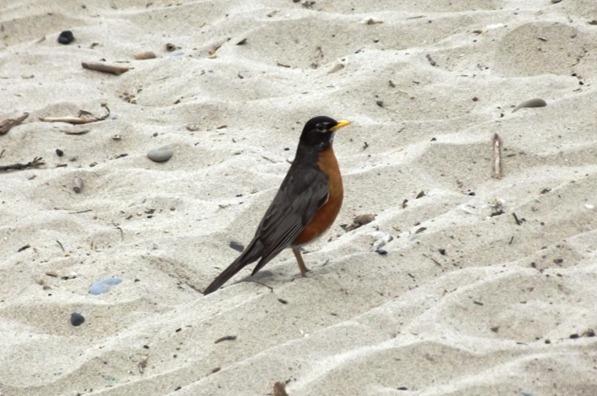 Bird on Toronto Island Beach